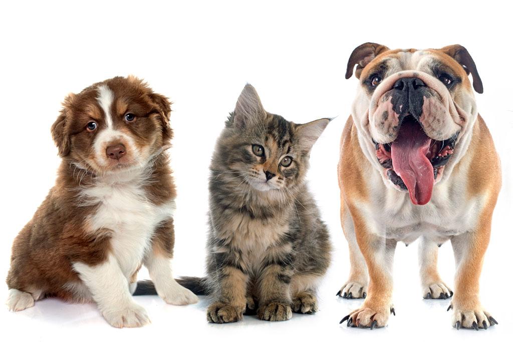 cbd-para-mascotas