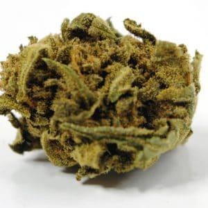 Berry Cogollos de CBD. Cannabis 100% Legal