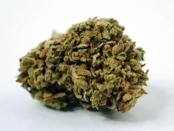 Mimosa marihuana cbd 2